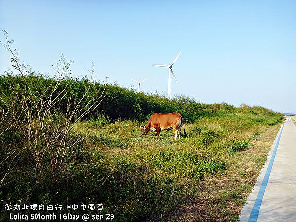 北環自由行 中屯風車 (31)