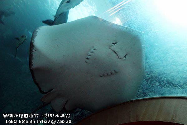 2012 9 30 澎湖水族館 (47)