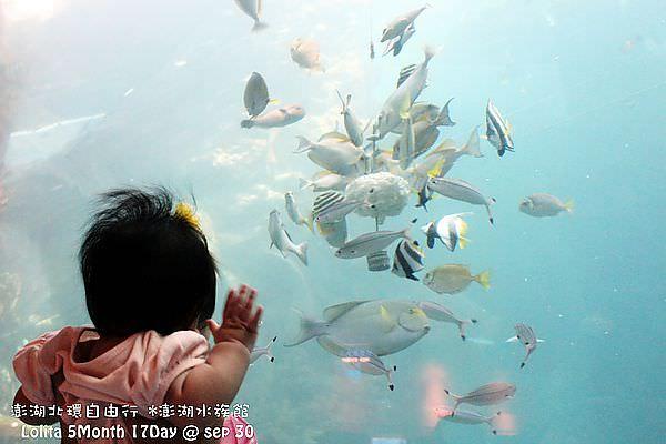 2012 9 30 澎湖水族館 (111)