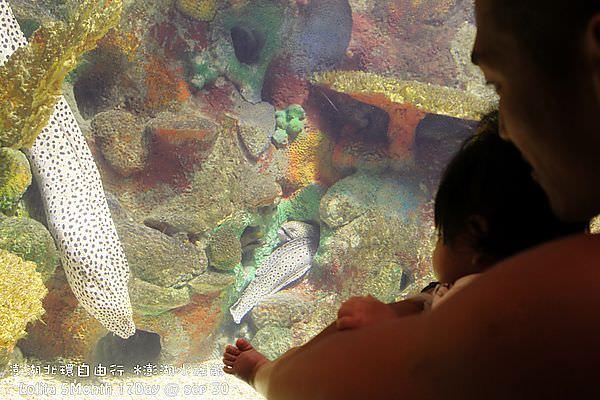 2012 9 30 澎湖水族館 (106)