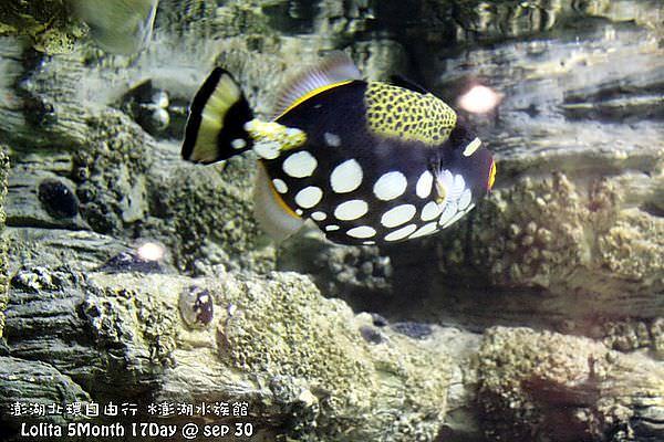2012 9 30 澎湖水族館 (31)