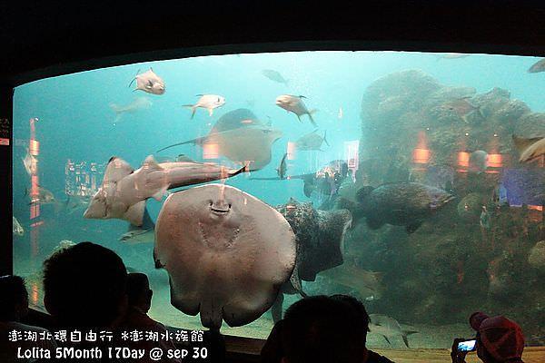 2012 9 30 澎湖水族館 (66)