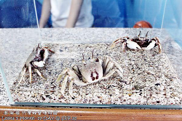 竹灣螃蟹館 (3)