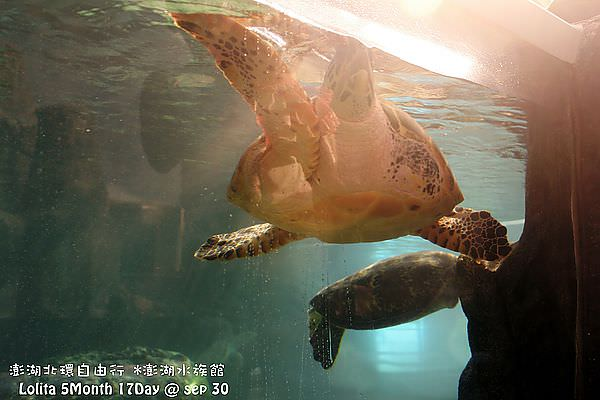 2012 9 30 澎湖水族館 (130)