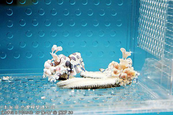 竹灣螃蟹館 (13)